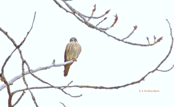 Kessie on the nesting tree...