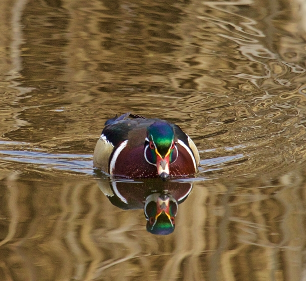 Belmont Pond, Kelowna, BC.